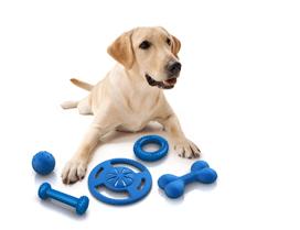 dog with bone