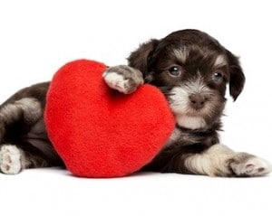 red heart dog